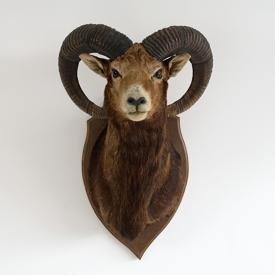 VINTAGE TAXIDERMY