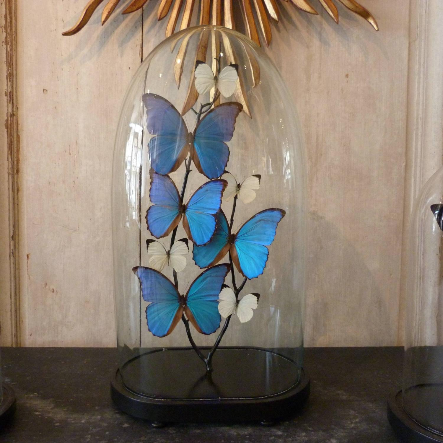 VICTORIAN GLASS DOME WITH BLUE & WHITE BUTTERFLIES