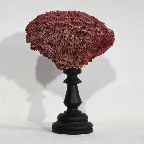 ANTIQUE RED CORAL FRAGMENT ON PEDESTAL BASE