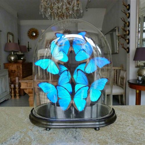 LARGE VICTORIAN DOME WITH IRRIDESCENT BUTTERFLIES