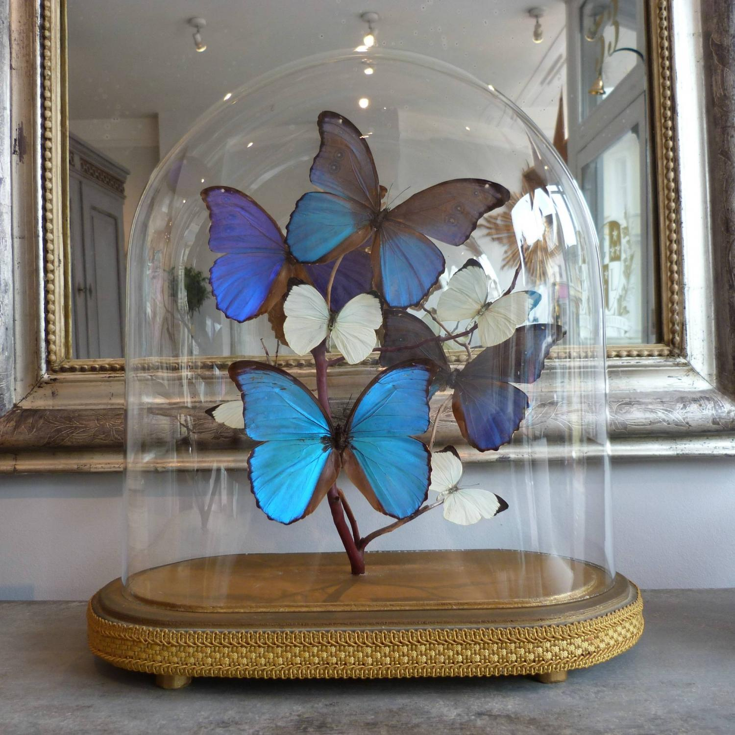 VINTAGE GLASS DOME WITH BLUE & WHITE BUTTERFLIES