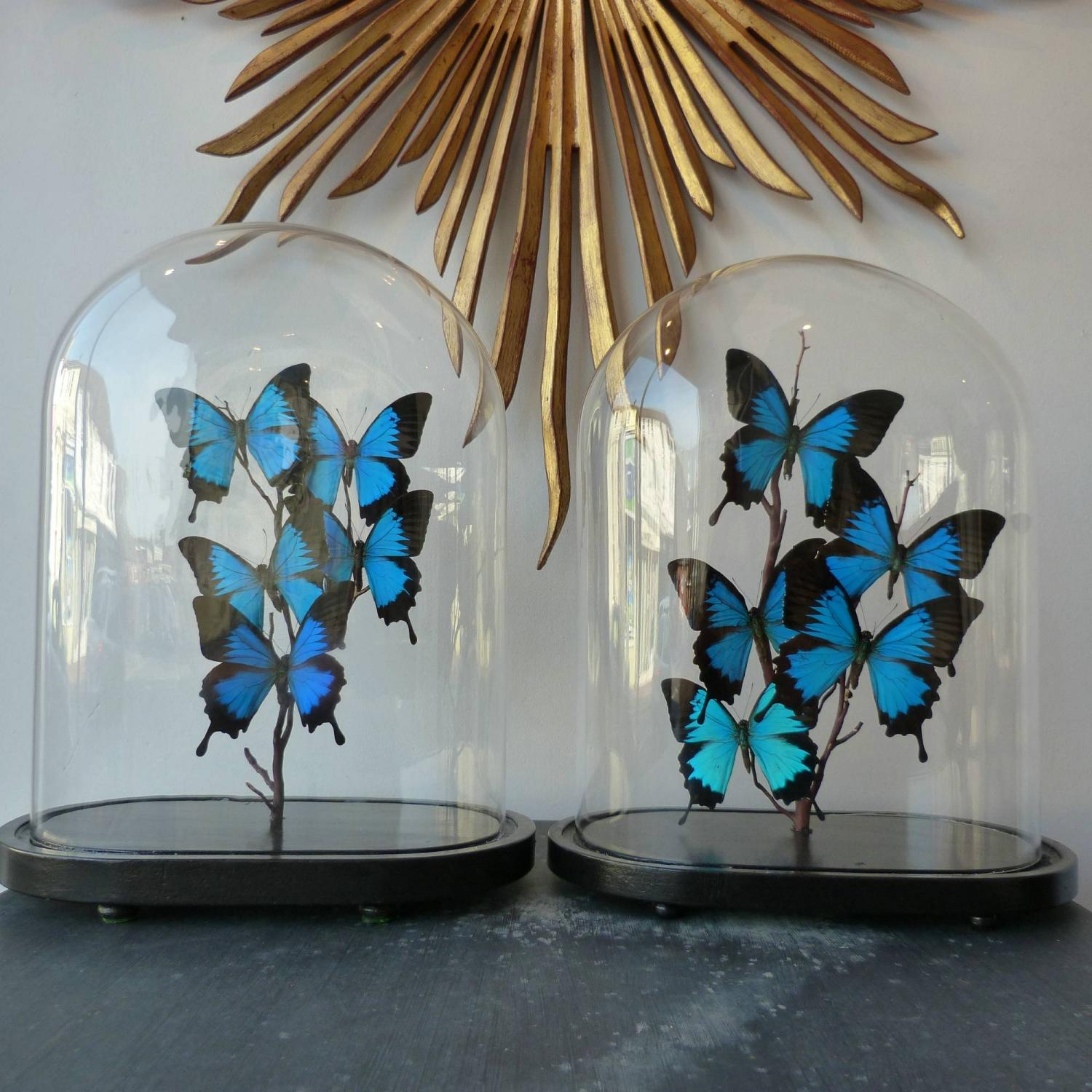 PAIR OF VINTAGE BUTTERFLY DOMES