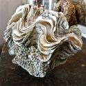 COMPLETE SOUTH PACIFIC GIANT CLAM SHELL - picture 1