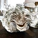 COMPLETE SOUTH PACIFIC GIANT CLAM SHELL - picture 4