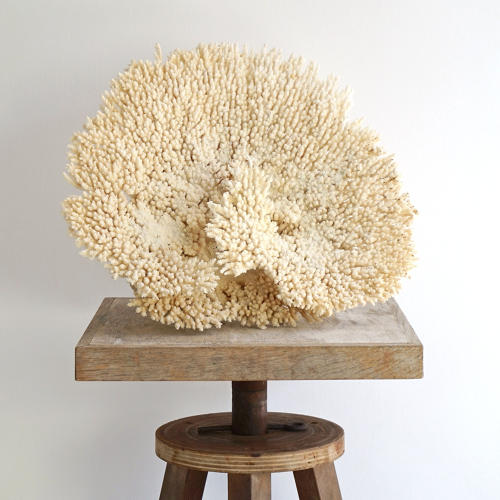 EXCEPTIONAL LARGE WHITE CORAL FRAGMENT