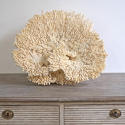 EXCEPTIONAL LARGE WHITE CORAL FRAGMENT - picture 3