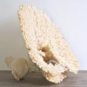 EXCEPTIONAL LARGE WHITE CORAL FRAGMENT - picture 5