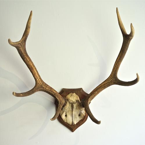 IMPRESSIVE LARGE SYMMETRICAL ANTLER PLAQUE