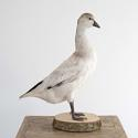 TAXIDERMY WHITE DUCK MOUNTED ON A WOODEN BASE - picture 2