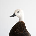 BEAUTIFUL PLUMAGE TAXIDERMY DUCK MOUNT - picture 2