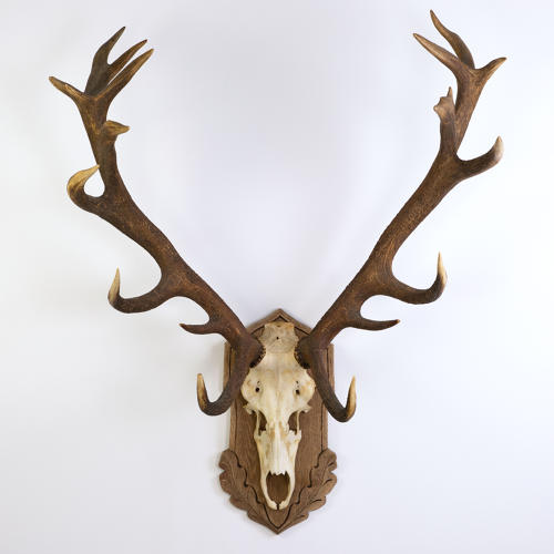 BLACK FOREST STAG MOUNT